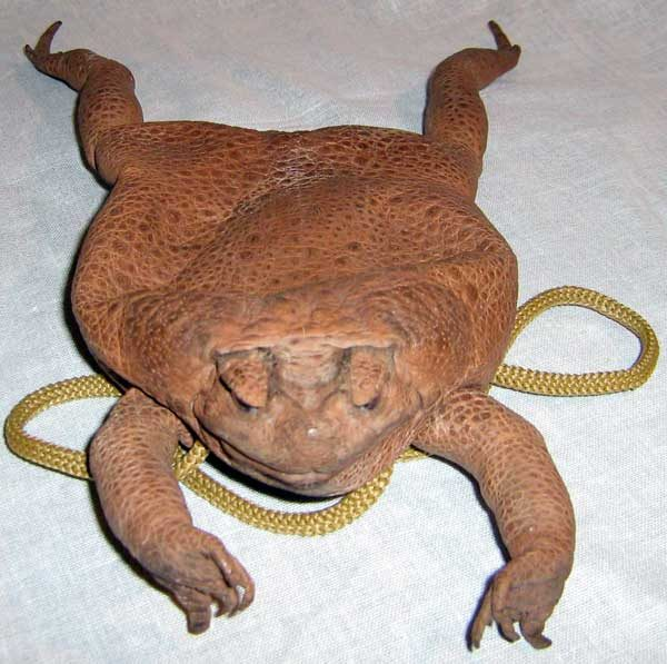 Toad Neck Purse with 4 legs bc