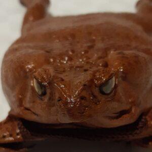 Cane toad 4 legged neck purse, shoulder cut